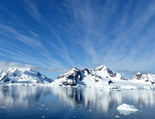 Antarctic Farce
